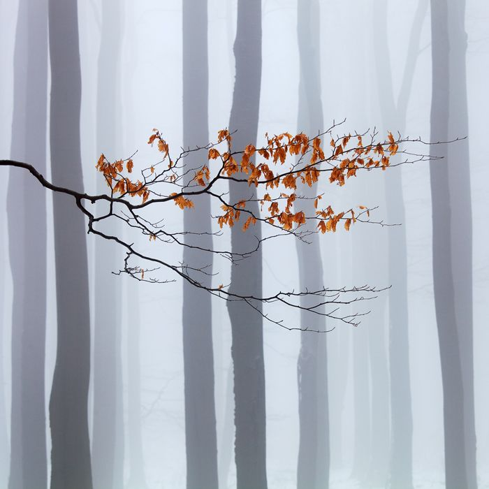 Autumn on Behance