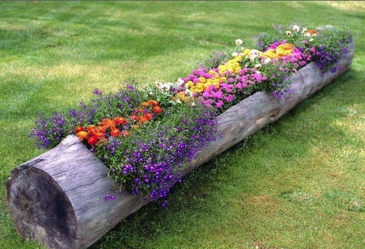 Hollowed out log garden