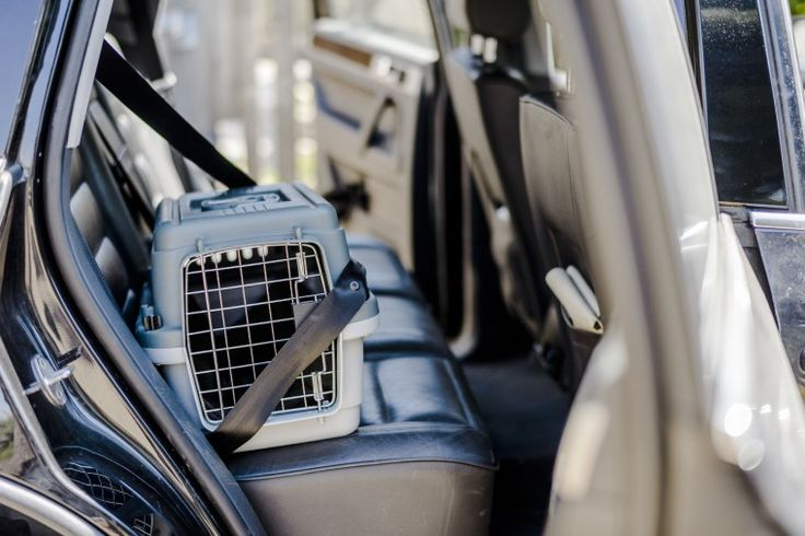 No need to leave puss, pooch or bunny behind: Blue Cross helps us travel safely with our pets find this amazing photo from Katzenworld
