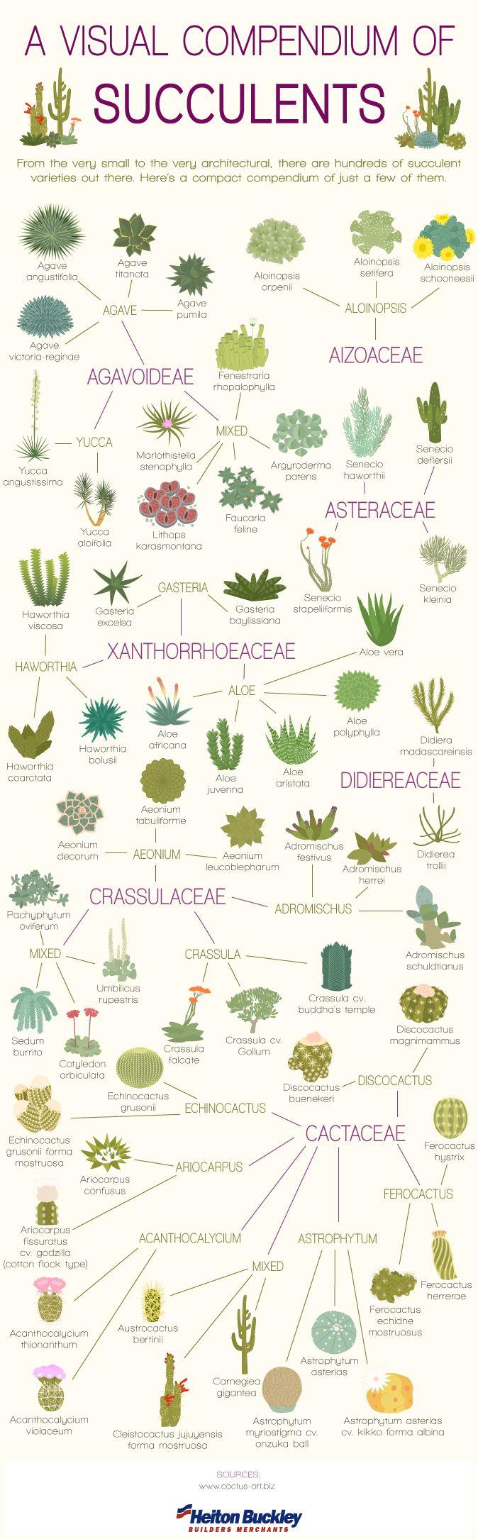 A Visual Compendium of Succulents by cactus.art.biz #Infographic #Succulents