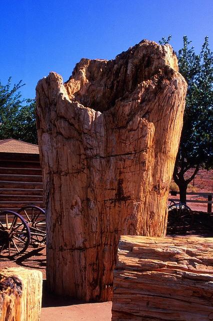 World's Largest Petrified Tree, Geronimo Trading Post....Geronimo, AZ