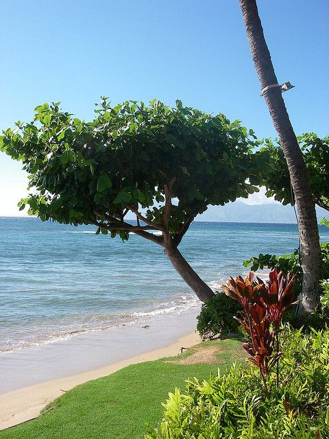 Maui's Top 7 free or nearly free things to do and see