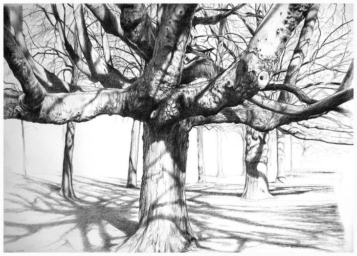 kees van der knaap - kastanje 2 (study of a chestnut tree) Drawing, conté crayon on paper, 2011, 100 x 70 cm