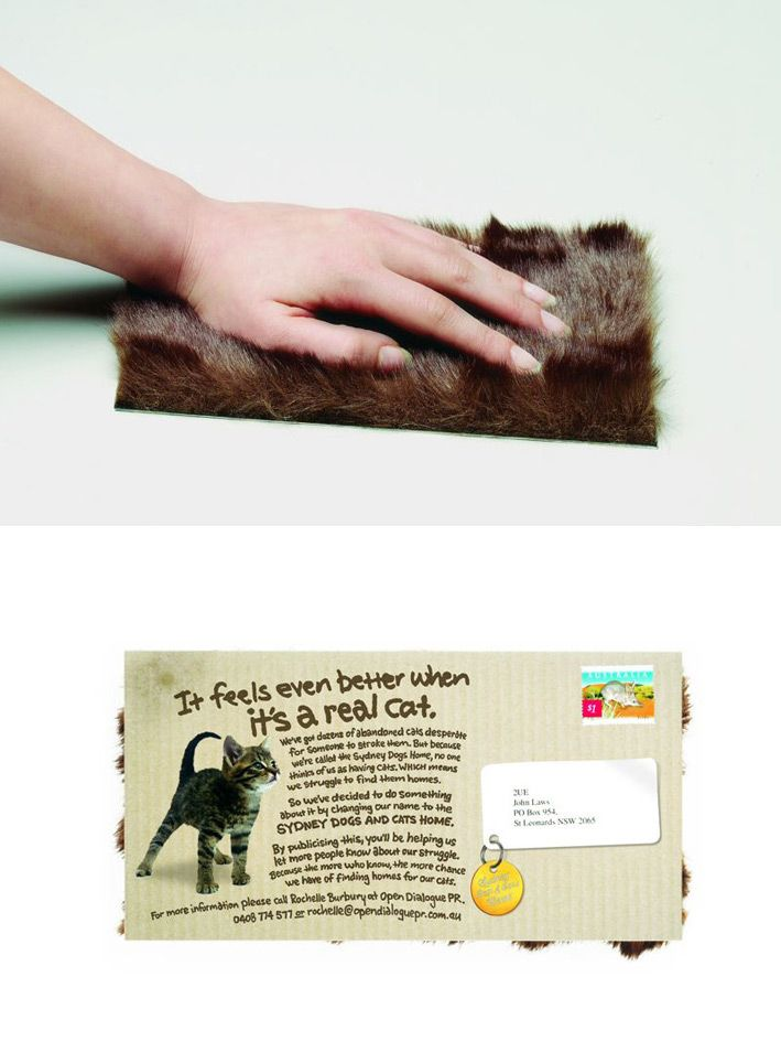 Direct Mail, an interesting piece from a shelter