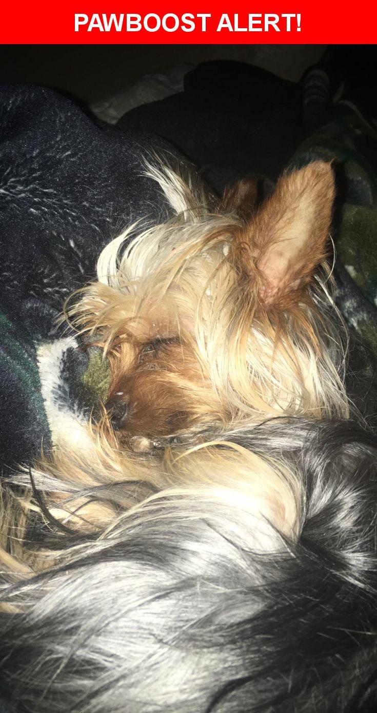 Please spread the word! Freddy was last seen in Sacramento, CA 95833.    Nearest Address: 618 Norwich Court, Sacramento, CA, United States