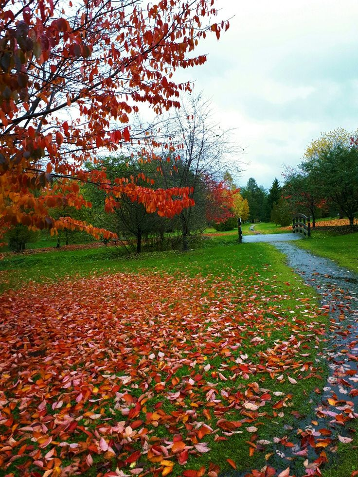 Autumn  Finland 10/10/2017