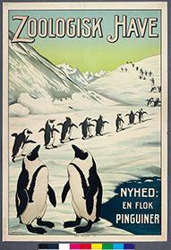 Zoo - Pingviner. Penguin poster from the Copenhagen Zoo.