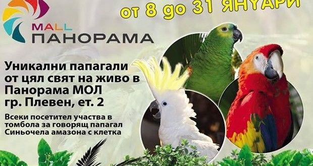 Най-голямата изложба на папагали в България вече и в Плевен! | Цвете