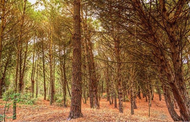 Cariló-Bosque en otoño