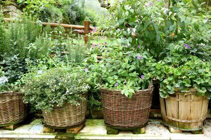 Herb Garden Ideas: Gardens Ideas, Wicker Baskets, Growing Herbs, Herbs Gardens, You, Planters, The Beast,  Flowerpot, Medicine Herbs