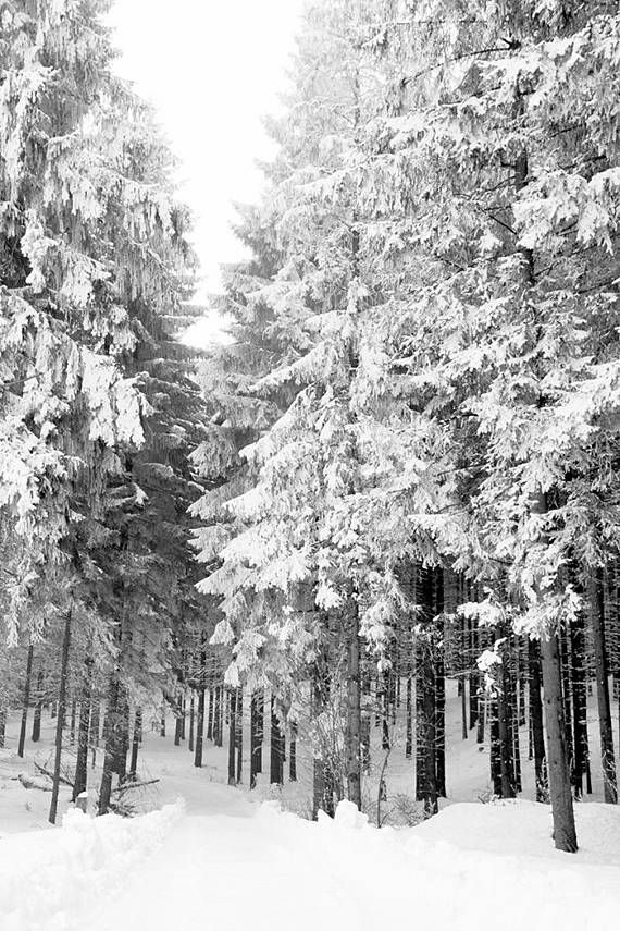 Forest Printable Winter Forest Print Pine Tree Forest Digital Etsy In 2020 Forest Photography Winter Forest Forest Wall Art