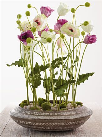 poppies--I can't even get them to grow in the ground let along in a little dish?!?!? interesting concept.