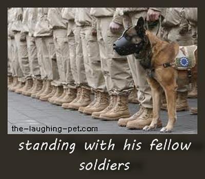 Dog soldier MWD