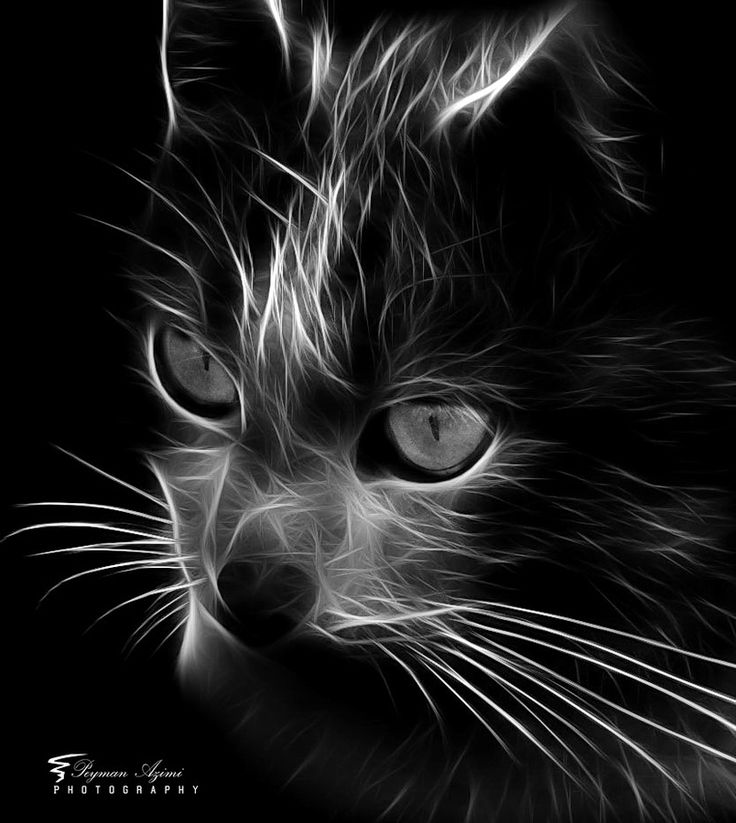 CAT!! by Peyman Az, via 500px