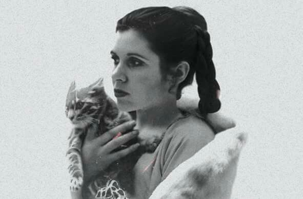 Carrie Fisher and cat