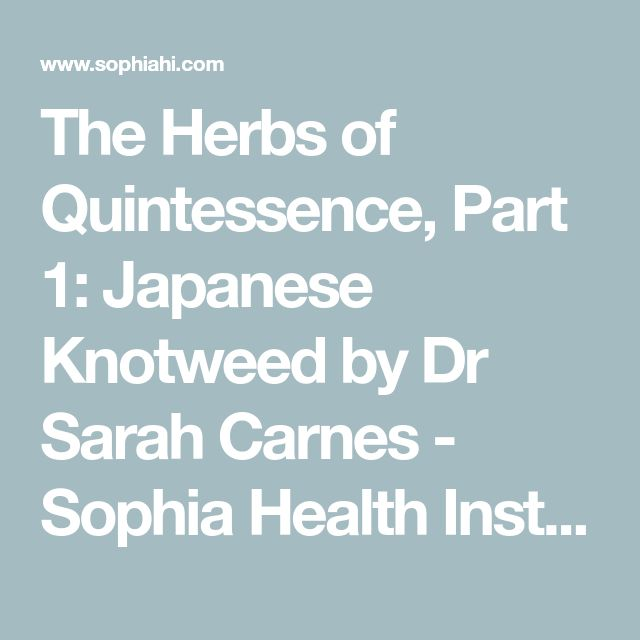 The Herbs of Quintessence, Part 1: Japanese Knotweed by Dr Sarah Carnes - Sophia Health Institute