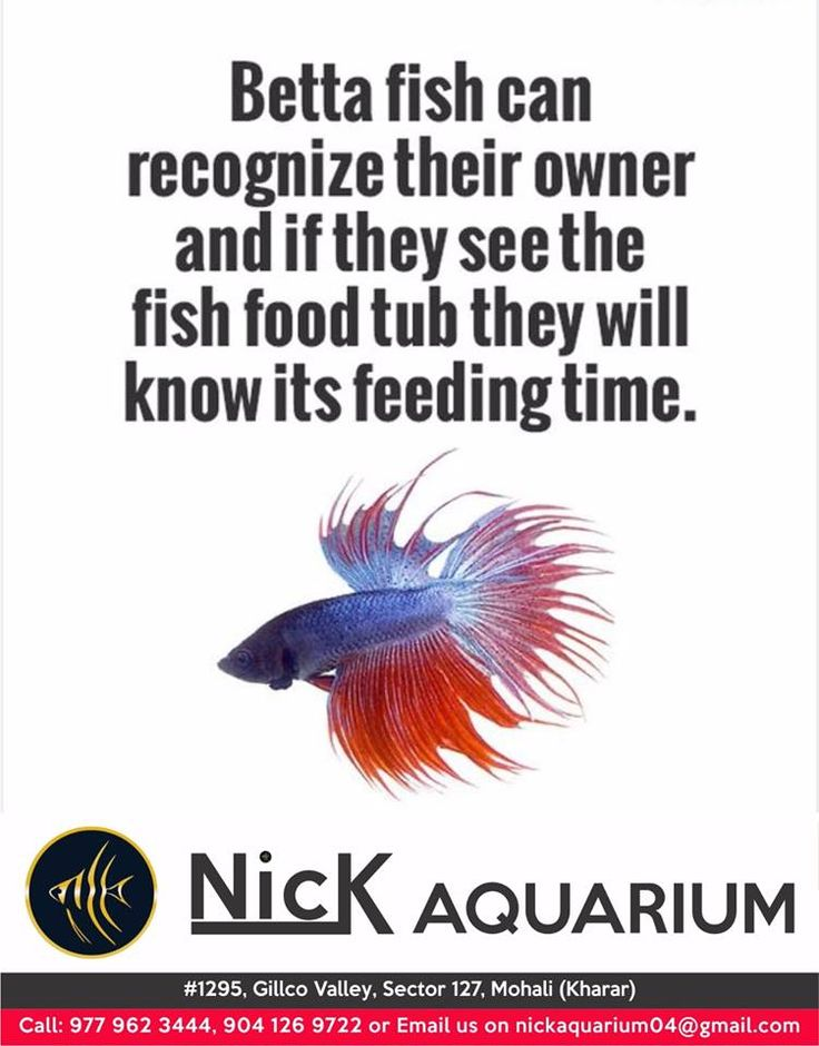24 best fish and aquarium images on pinterest aquariums for What can you feed betta fish