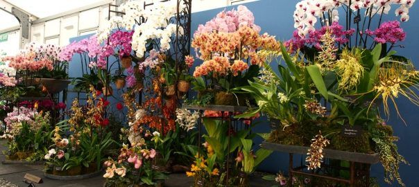 Specialist Nurseries at the RHS Hampton Court Palace Flower Show 2017 - Pumpkin Beth