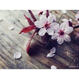 【aquatic_amoeba】さんのInstagramをピンしています。 《More #cherryblossoms #cherry #blossoms #flowers #japaneseflowers #pinkflowers  #whiteflowers #flowerpetals #nature #natural #beautiful #lovely #asianflower #asian #flowers》