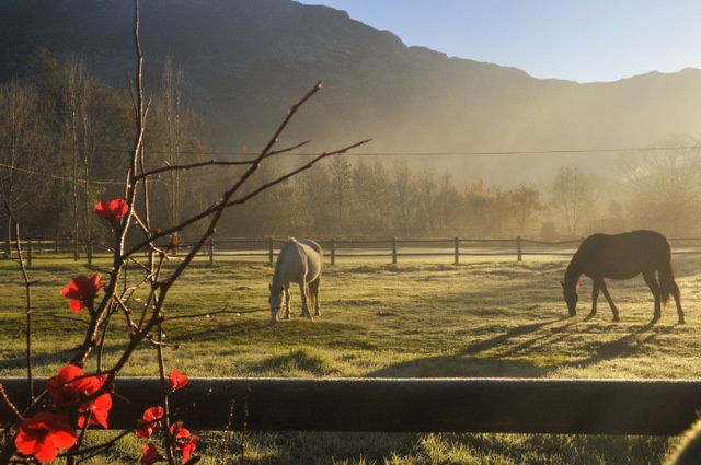 Greyton Tourism Official Website: Greyton accommodation, events, art, shops and more