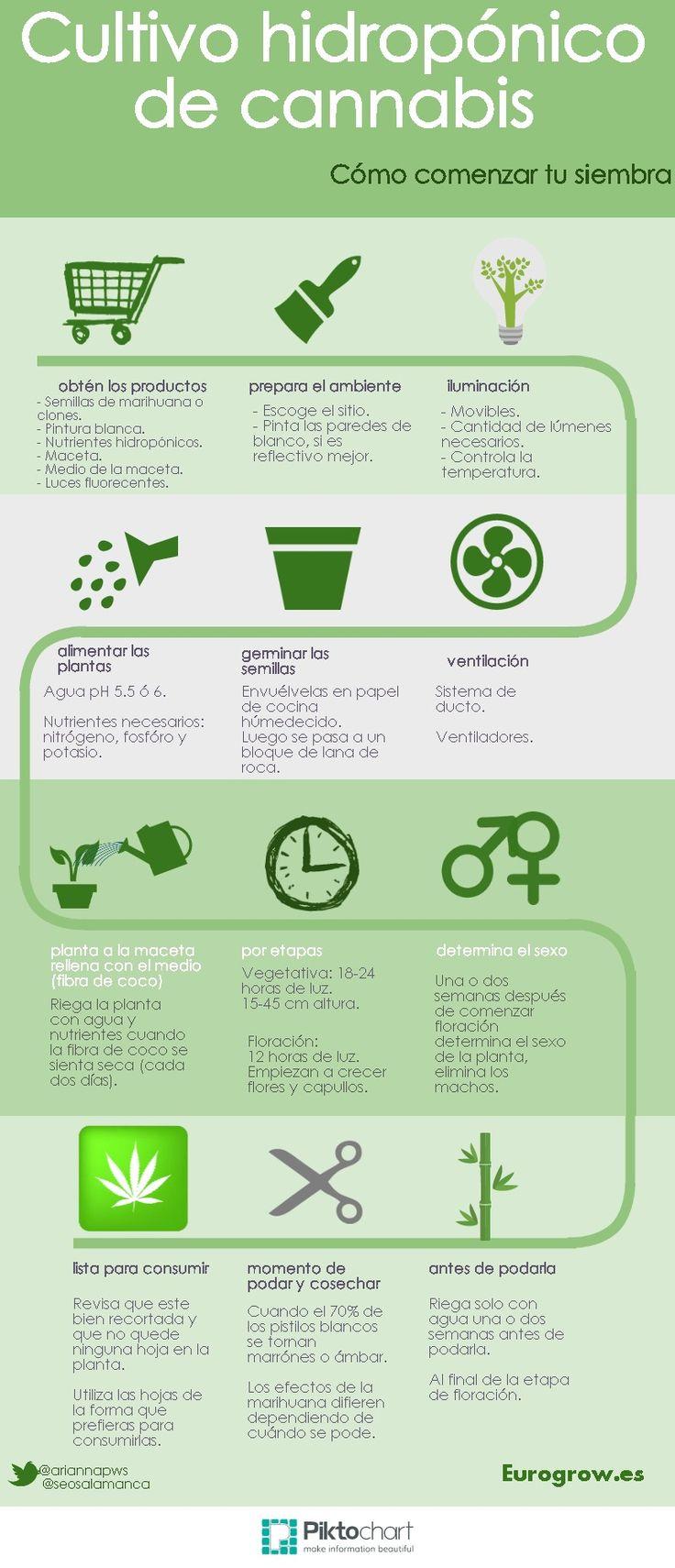 La planta conocida como Cannabis Sativa es muy fácil de cultivar en casa siempre que sepas cómo hacerlo y qué necesitas. Desde grow shop onlines te mostramos detalles de cómo comenzar tu cultivo hi...
