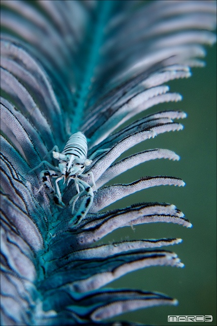 1538 best blue and green images on pinterest shades of blue