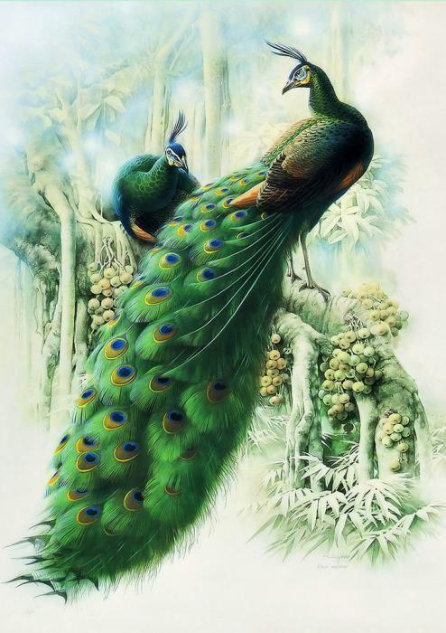 Creative Peacock Paintings