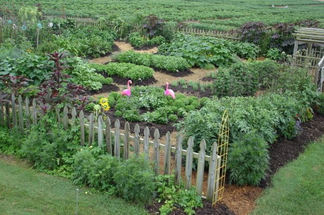 Take-Away Ideas from Vegetable Gardens - Bonnie Plants