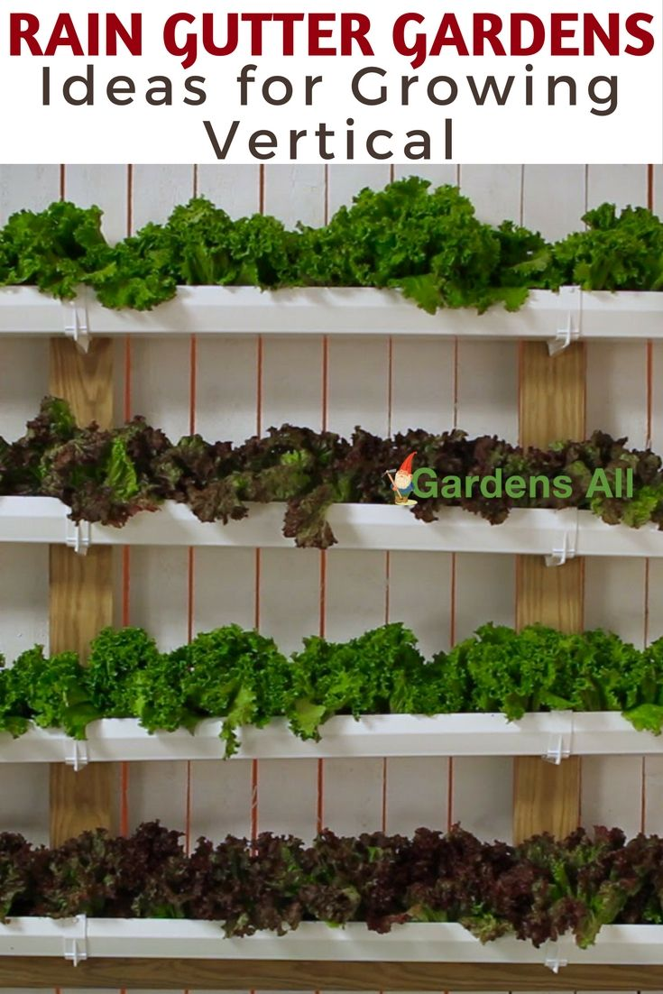 Conserving resources, reusing and repurposing—aka upcycling—just makes sense. So we really like this vertical gardening method that will also use up old rain gutter pieces. gardening | DIY Home & Garden | Rain Gutter Growing