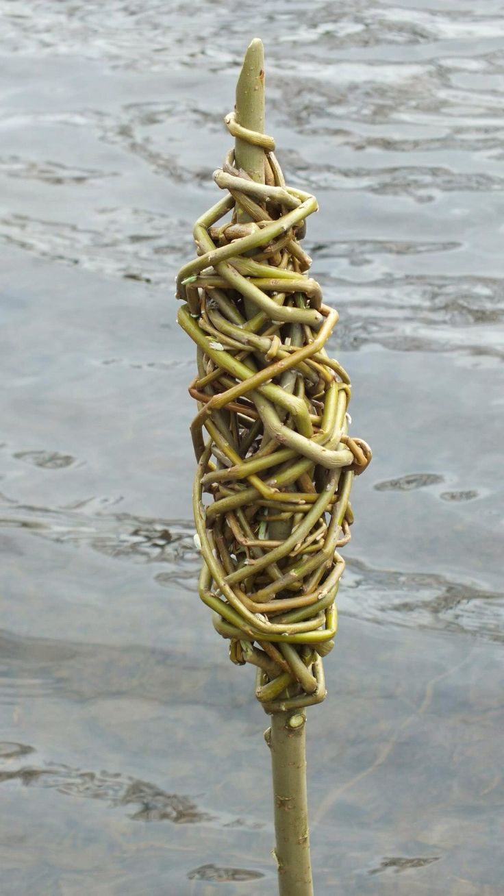 Wikkelen met Salix=wilg