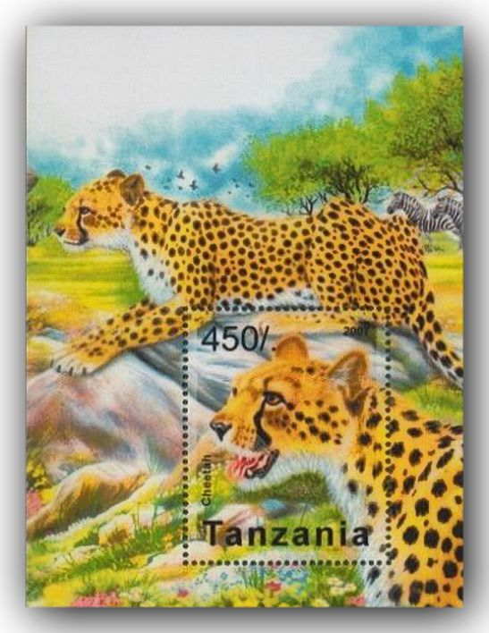 Tanzania - Cheetah / United Republic of Tanzania is a country in East Africa within the African Great Lakes region. It is bordered by Kenya and Uganda to the north; Rwanda, Burundi, and the Democratic Republic of the Congo to the west; Zambia, Malawi, and Mozambique to the south.
