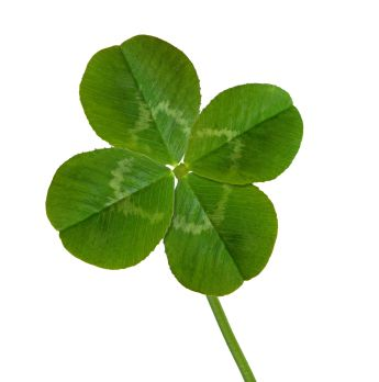 Pawpaw was always finding 4 leaf clovers. He could just look down and spot a few instantly