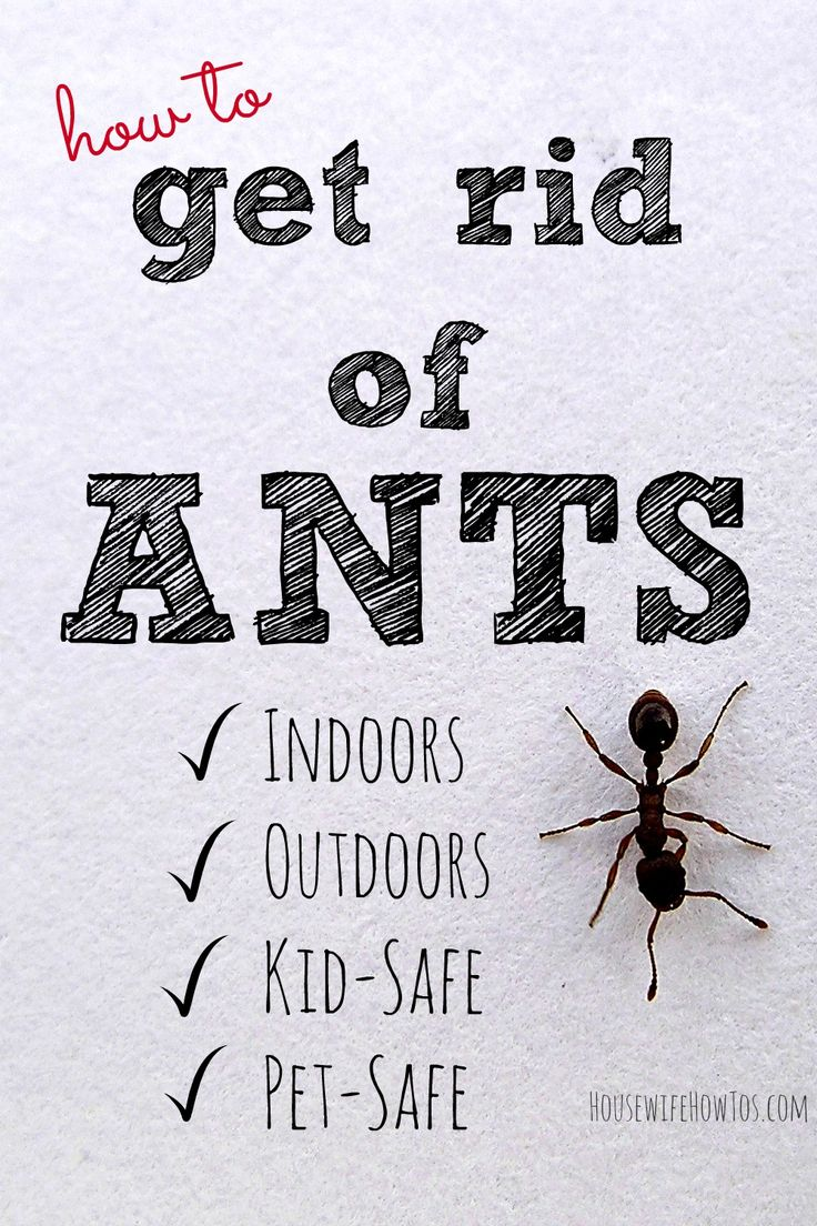 How To Get Rid Of Ants Nontoxic, Kid and PetSafe