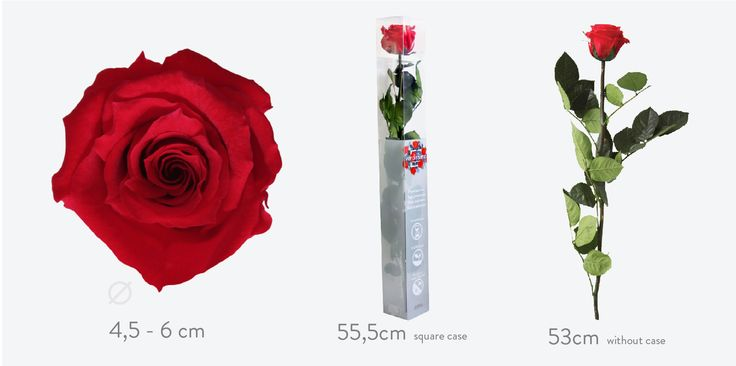 Inspiration: When in doubt, a long stem rose! The standard rose is the optimum balance between prominent petals and the slender long stem. Timeless and elegant. It looks right anywhere from a large romantic bouquet to a minimalistic solitaire vase.