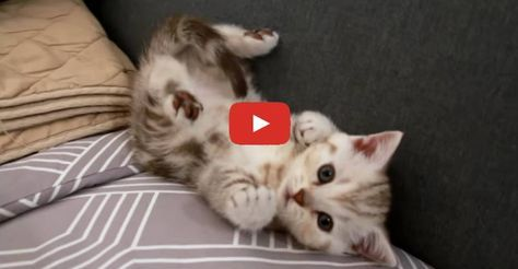 Too Cute! Kitten Sees His Tail for the First Time