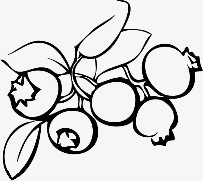 Blueberry Black And White Black And White Clipart Black And White Fruit Art