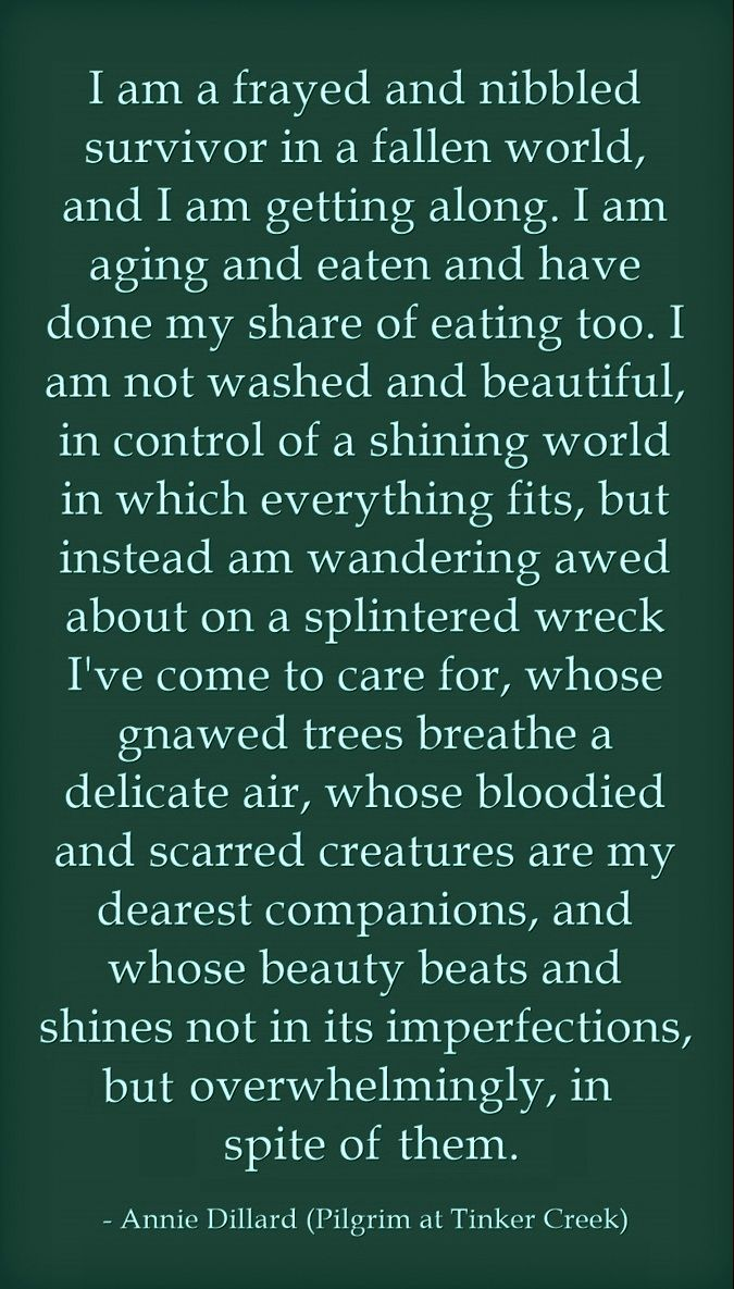 Pilgrim at Tinker Creek - Annie Dillard. ~ETS #lifeisbeautiful #embraceimperfections