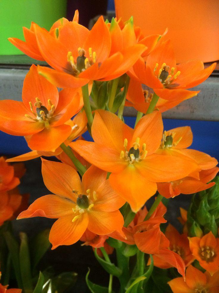 Orange is fresh!!