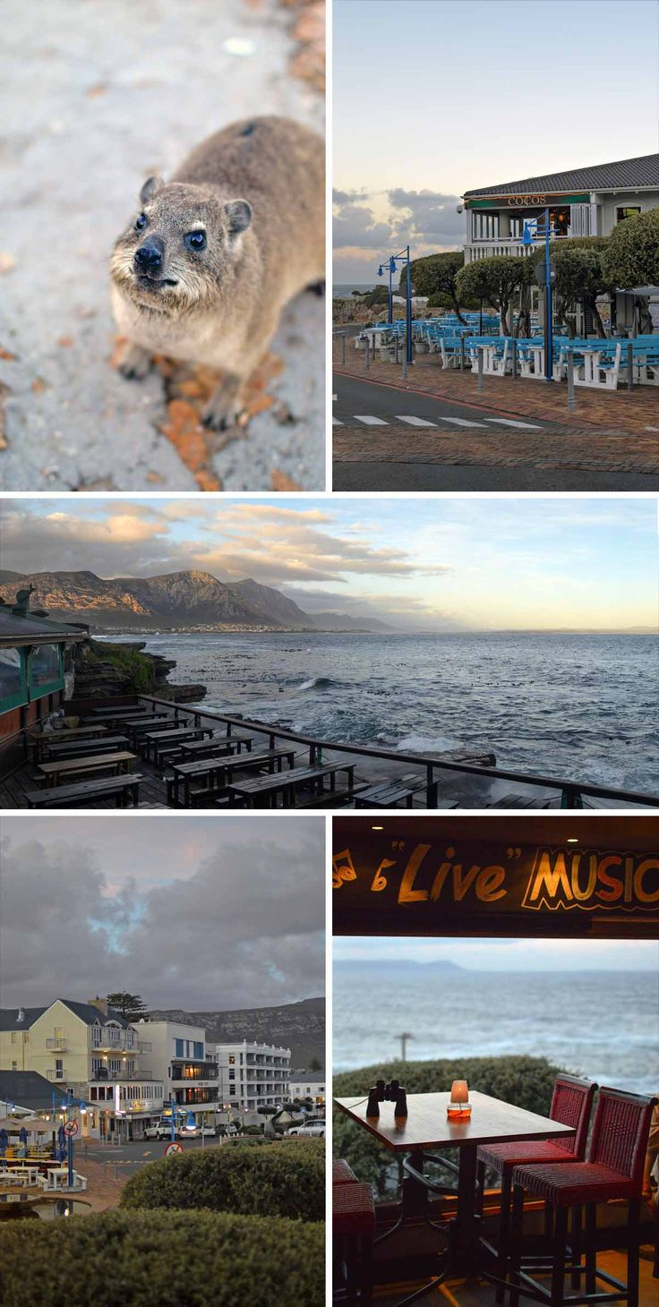 Hermanus - home to whales, the dassie and stunning South African scenery   heneedsfood.com