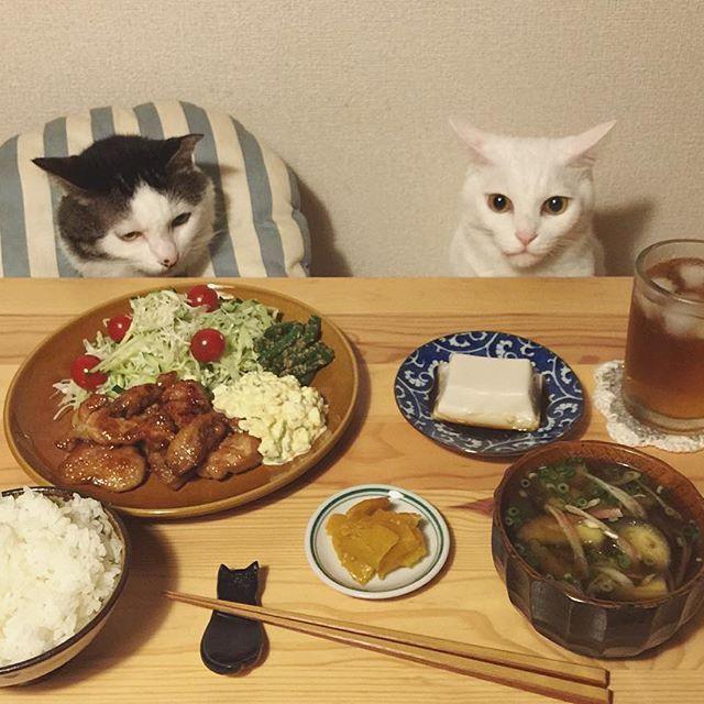 揚げないチキン南蛮♩ 自家製・ラッキョのタルタルソース。 お土産に貰っら仙台味噌で、大好きな茄子とミョウガのお味噌汁❤︎ お父はん帰って来る思て、久しぶりにまともにご飯作ったけど到着は朝方らしい…。だから3人でご飯。 #八おこめ #ねこ部 #cat #ねこ #八おこめ食べ物 #チキン南蛮定食