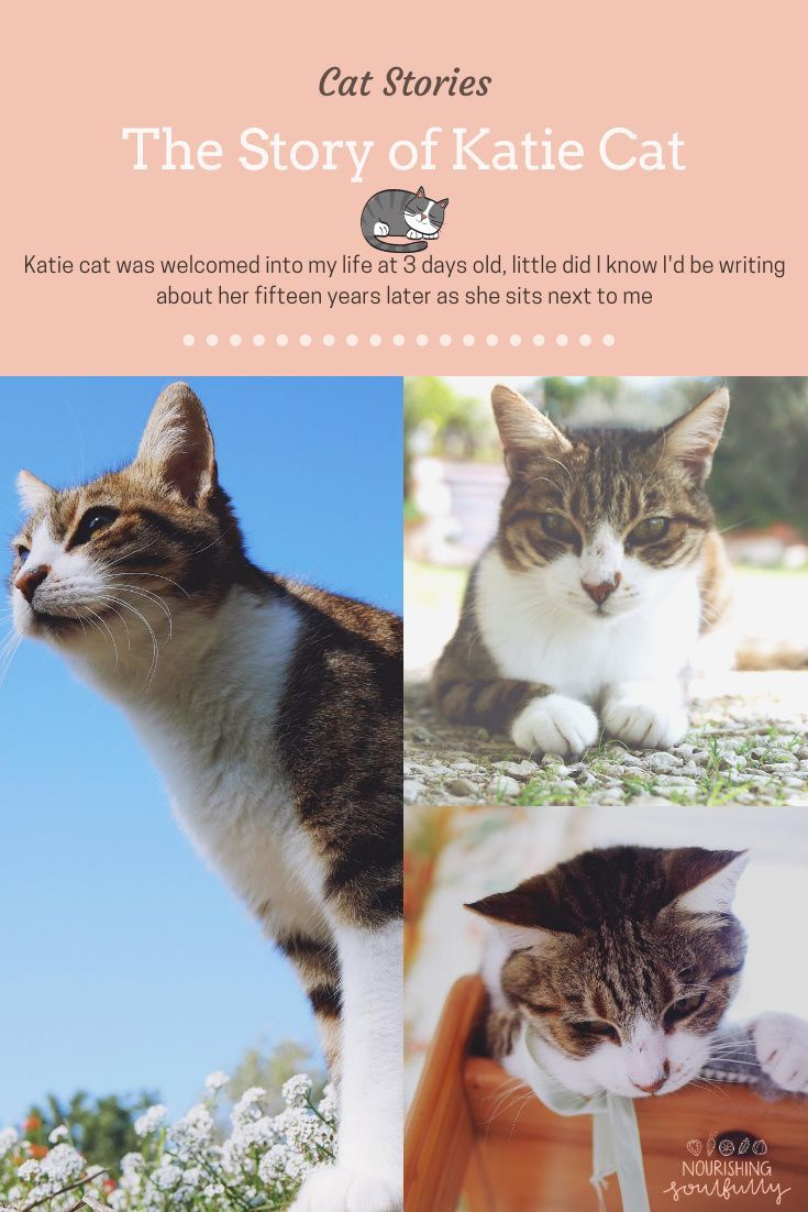 The Story Of Katie Cat Nourishing Soulfully In 2020 Cats Mama Cat Super Cute Animals