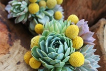 succulent and billy button bouquets
