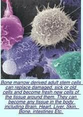Adult Stem Cell Nutrition - Together We Earn - http://togetherweearn.com/group/adult-stem-cell-nutrition