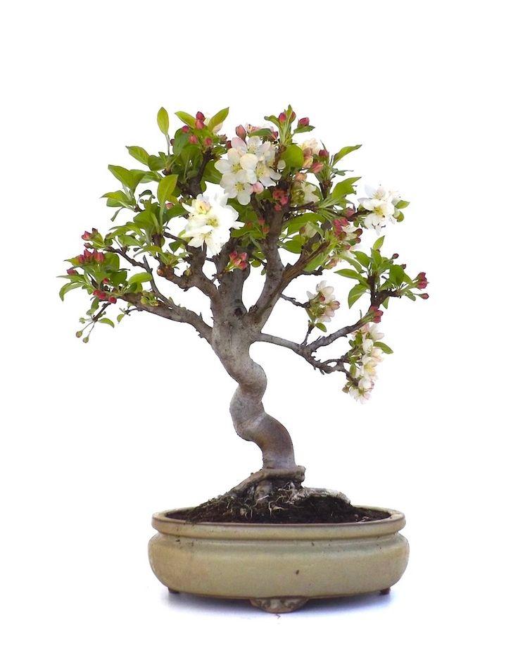 Les 25 meilleures id es de la cat gorie pommier du japon sur pinterest tatouages de fleurs de - Ou acheter le tapis champ de fleurs ...