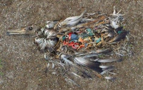 19 insólitas imágenes que evidencian la contaminación y el deterioro del medio ambiente - Ecoosfera