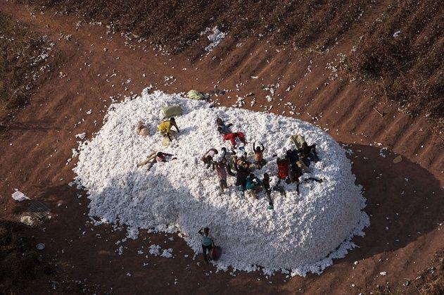 Cotton harvest, Burkina Faso.