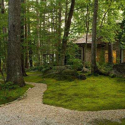 Plant a moss lawn where grass won't grow   southernliving.com
