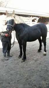 Znalezione obrazy dla zapytania gumofilce+rolnik+kon