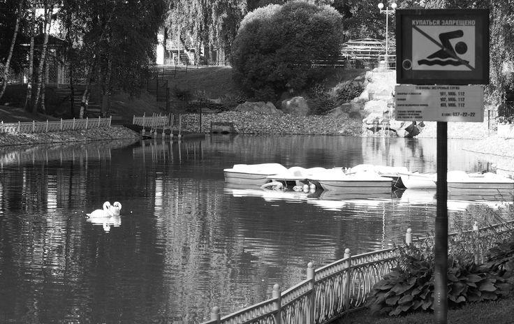 "Swans break ""No swimming"" rule:) by Alexander Polomodov on 500px"
