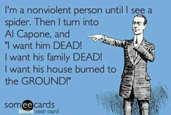 Yeah, I admit it, I am violent when it comes to spiders in the house.